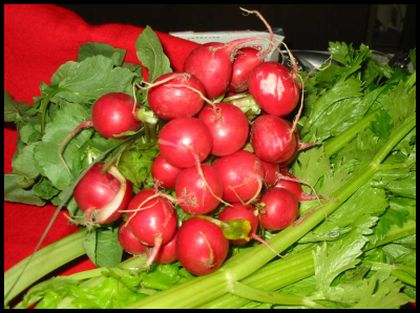 rabanos Dieta de Tomate de Árbol y Rábano