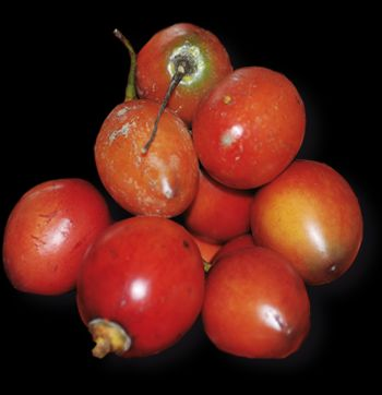 tomate de arbol La dieta de la sopa de tomate de árbol para bajar de peso rápido.